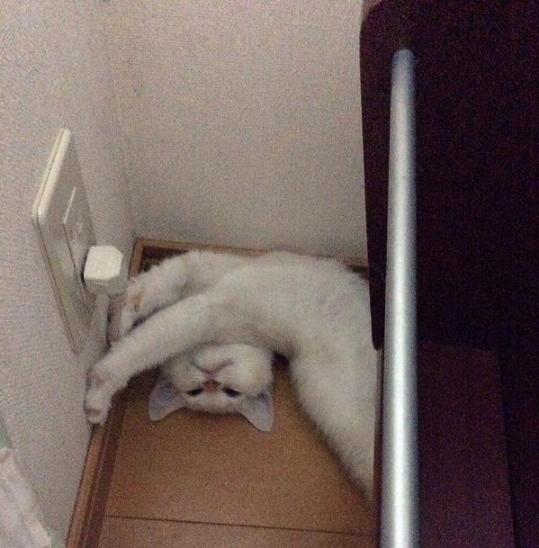 ファンキー,猫ちゃん,おもしろ画像,まとめ017