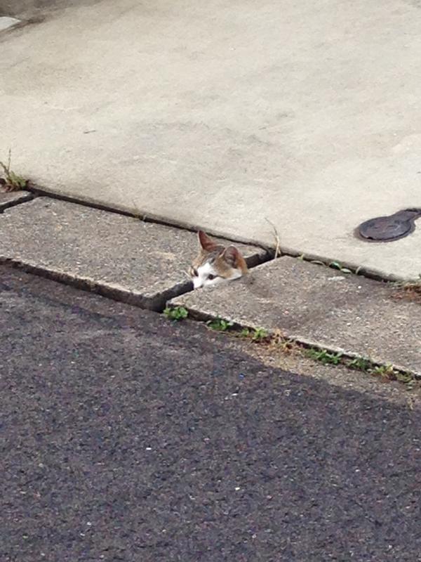ファンキー,猫ちゃん,おもしろ画像,まとめ023