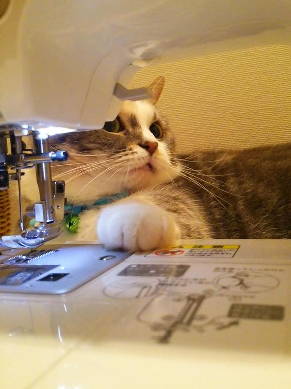 ファンキー,猫ちゃん,おもしろ画像,まとめ031