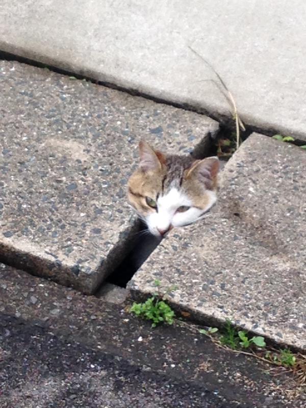 ファンキー,猫ちゃん,おもしろ画像,まとめ040