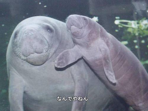 動物,ほんわか,癒される,可愛い,画像,まとめ001