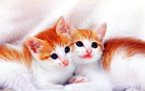 動物,ほんわか,癒される,可愛い,画像,まとめ002