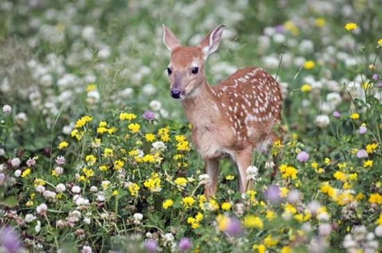 動物,ほんわか,癒される,可愛い,画像,まとめ004