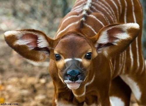 動物,ほんわか,癒される,可愛い,画像,まとめ006