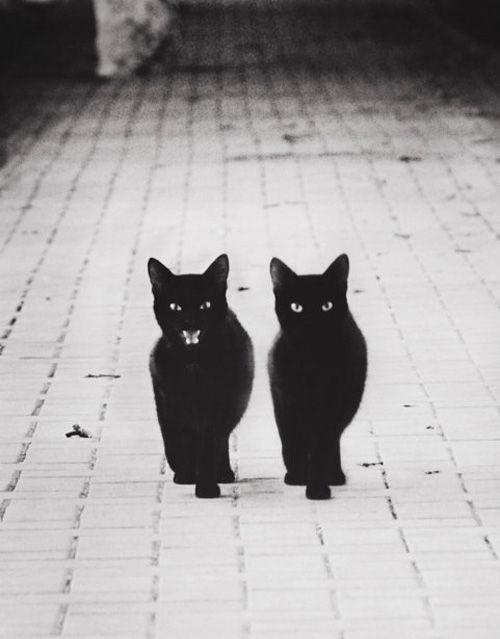 怖い,愛らしい,黒猫,画像,貼っていく006