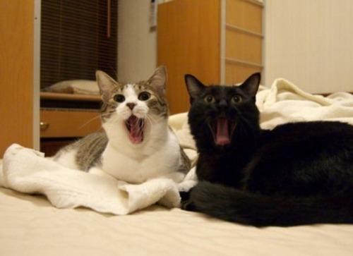 怖い,愛らしい,黒猫,画像,貼っていく008