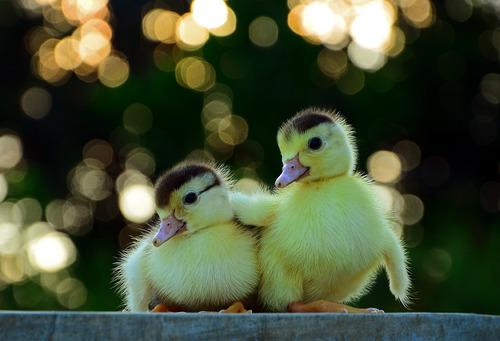 動物,ほんわか,癒される,可愛い,画像,まとめ010