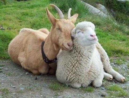 動物,ほんわか,癒される,可愛い,画像,まとめ012