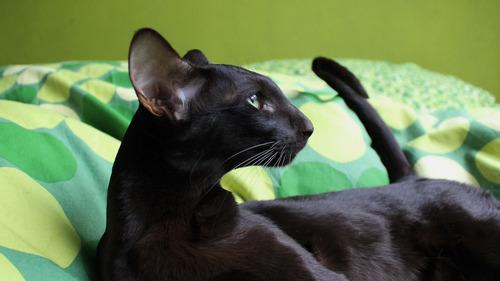 怖い,愛らしい,黒猫,画像,貼っていく012