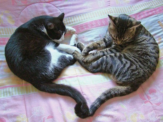 キュン,猫,画像,まとめ014
