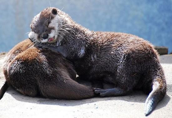 動物,ほんわか,癒される,可愛い,画像,まとめ014
