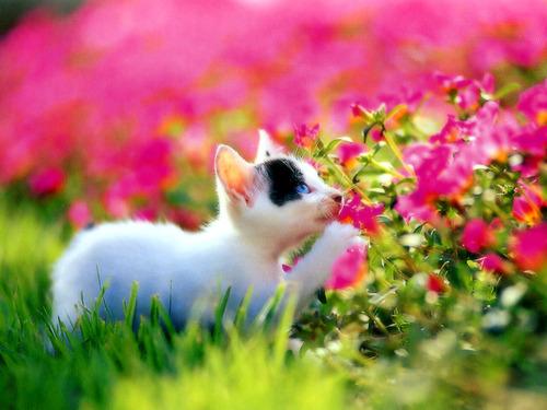 動物,ほんわか,癒される,可愛い,画像,まとめ016