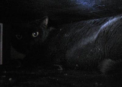 怖い,愛らしい,黒猫,画像,貼っていく016