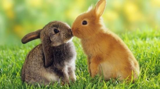動物,ほんわか,癒される,可愛い,画像,まとめ018