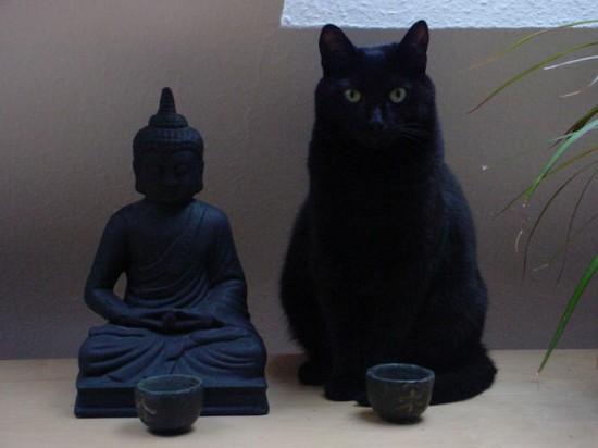 怖い,愛らしい,黒猫,画像,貼っていく018