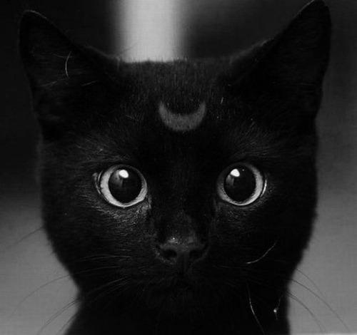 キュン,猫,画像,まとめ020