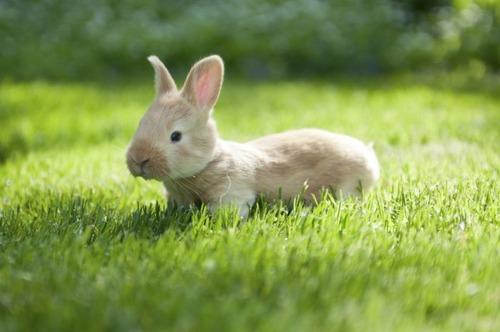 動物,ほんわか,癒される,可愛い,画像,まとめ020