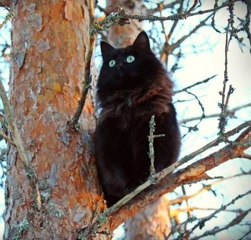 怖い,愛らしい,黒猫,画像,貼っていく020