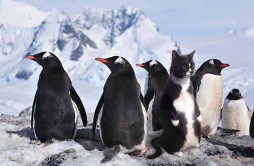 動物,ほんわか,癒される,可愛い,画像,まとめ022
