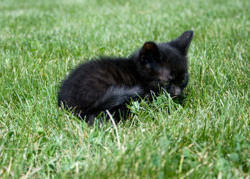 怖い,愛らしい,黒猫,画像,貼っていく022