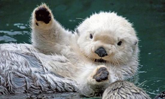 動物,ほんわか,癒される,可愛い,画像,まとめ024