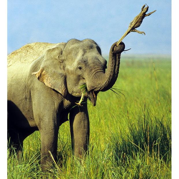 動物,ほんわか,癒される,可愛い,画像,まとめ026