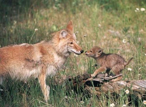 動物,ほんわか,癒される,可愛い,画像,まとめ028