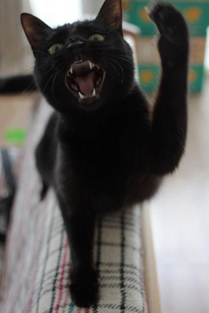 怖い,愛らしい,黒猫,画像,貼っていく028