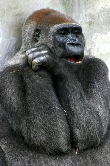 動物,ほんわか,癒される,可愛い,画像,まとめ030