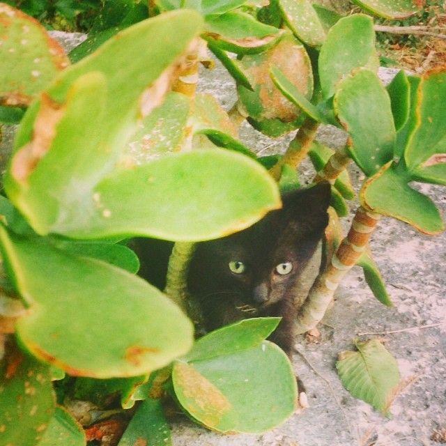 怖い,愛らしい,黒猫,画像,貼っていく030