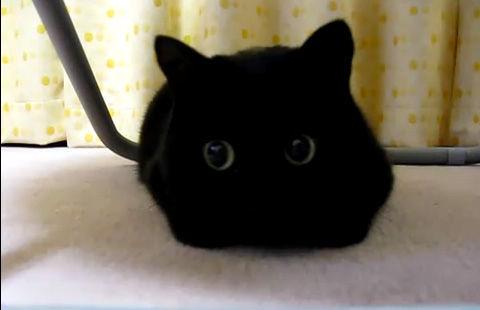怖い,愛らしい,黒猫,画像,貼っていく032