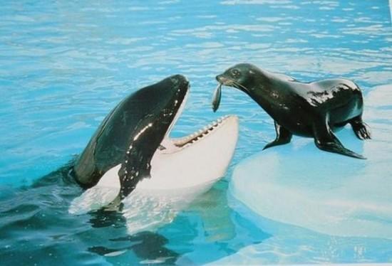 動物,ほんわか,癒される,可愛い,画像,まとめ035