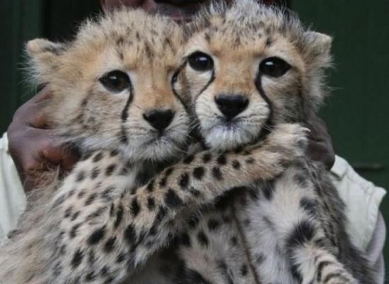 動物,ほんわか,癒される,可愛い,画像,まとめ037