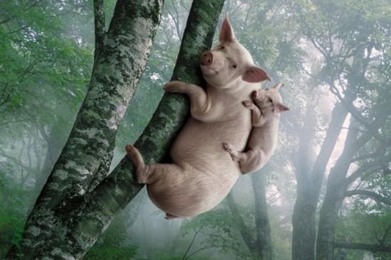 動物,ほんわか,癒される,可愛い,画像,まとめ050