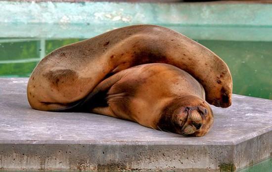 動物,ほんわか,癒される,可愛い,画像,まとめ056