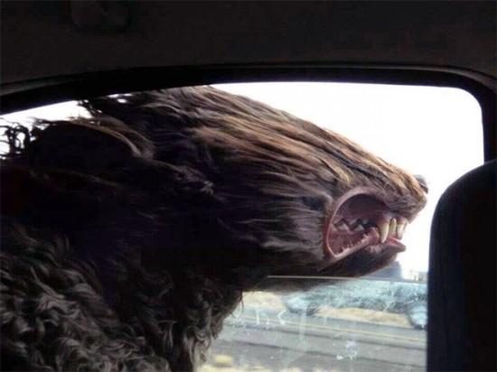 車,犬,画像,まとめ002