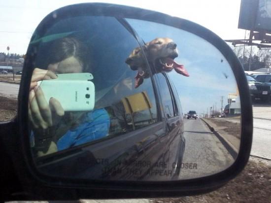 車,犬,画像,まとめ004