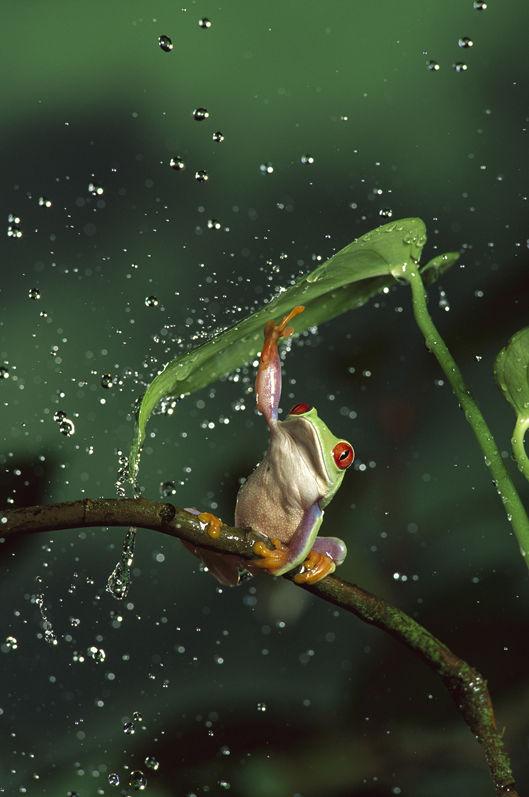 愛らしい,カエル,画像まとめ004