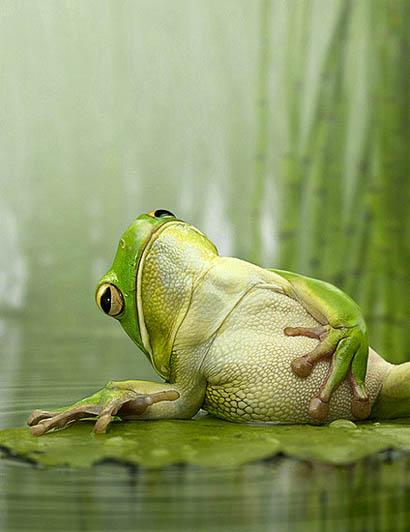 愛らしい,カエル,画像まとめ005