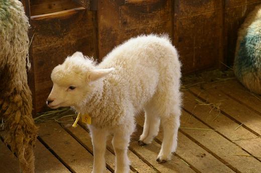 癒されすぎ,赤ちゃん,動物画像,まとめ005