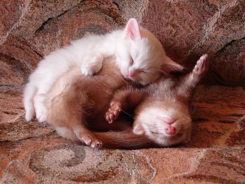 癒される,ペット,寝る,画像まとめ006