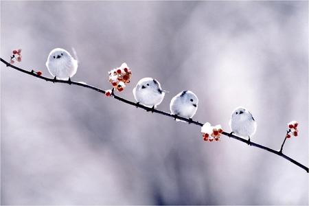 可愛すぎる,小鳥,シマエナガ,画像,まとめ007