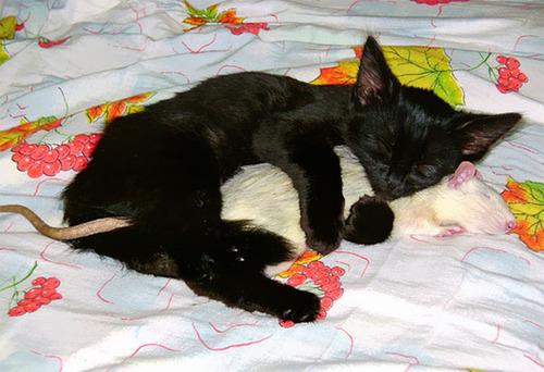 癒される,ペット,寝る,画像まとめ008