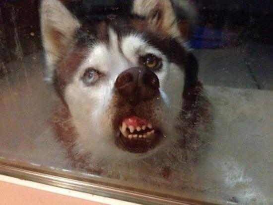 爆笑,動物,変顔,おもしろ画像008