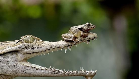 愛らしい,カエル,画像まとめ012