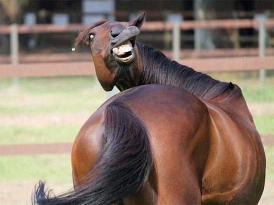 爆笑,動物,変顔,おもしろ画像012