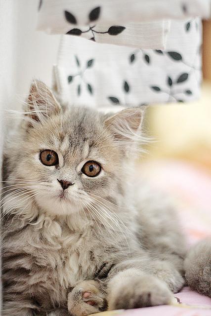センスのいい,可愛い,猫,写真,まとめ015