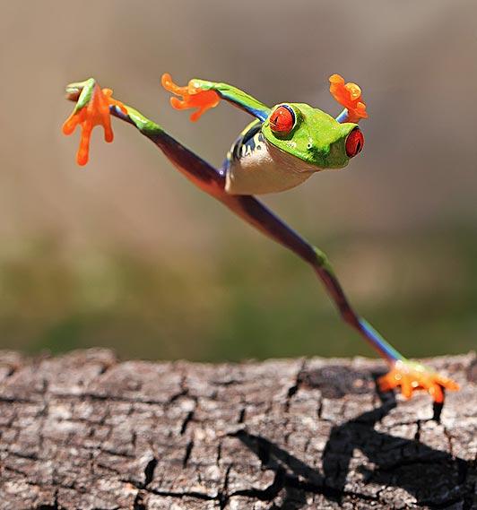 愛らしい,カエル,画像まとめ016