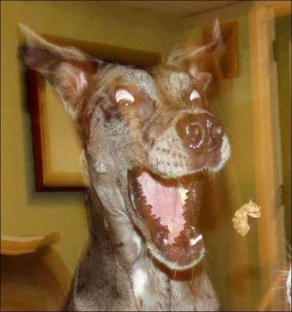 爆笑,動物,変顔,おもしろ画像016