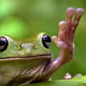 愛らしい,カエル,画像まとめ018
